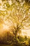 Tree of Life, Anamaya Resort, Costa Rica