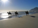 costa-rica-horseback-riding-tour-300x225